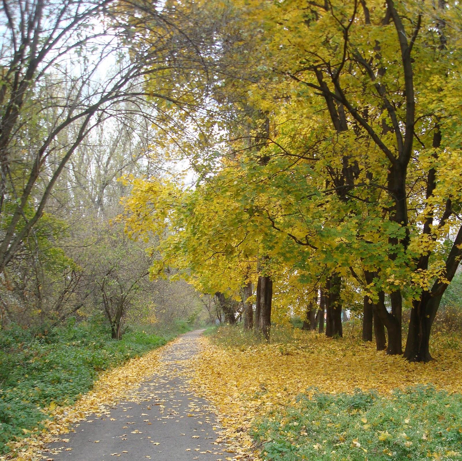z błękitnym niebem! jesienna droga
