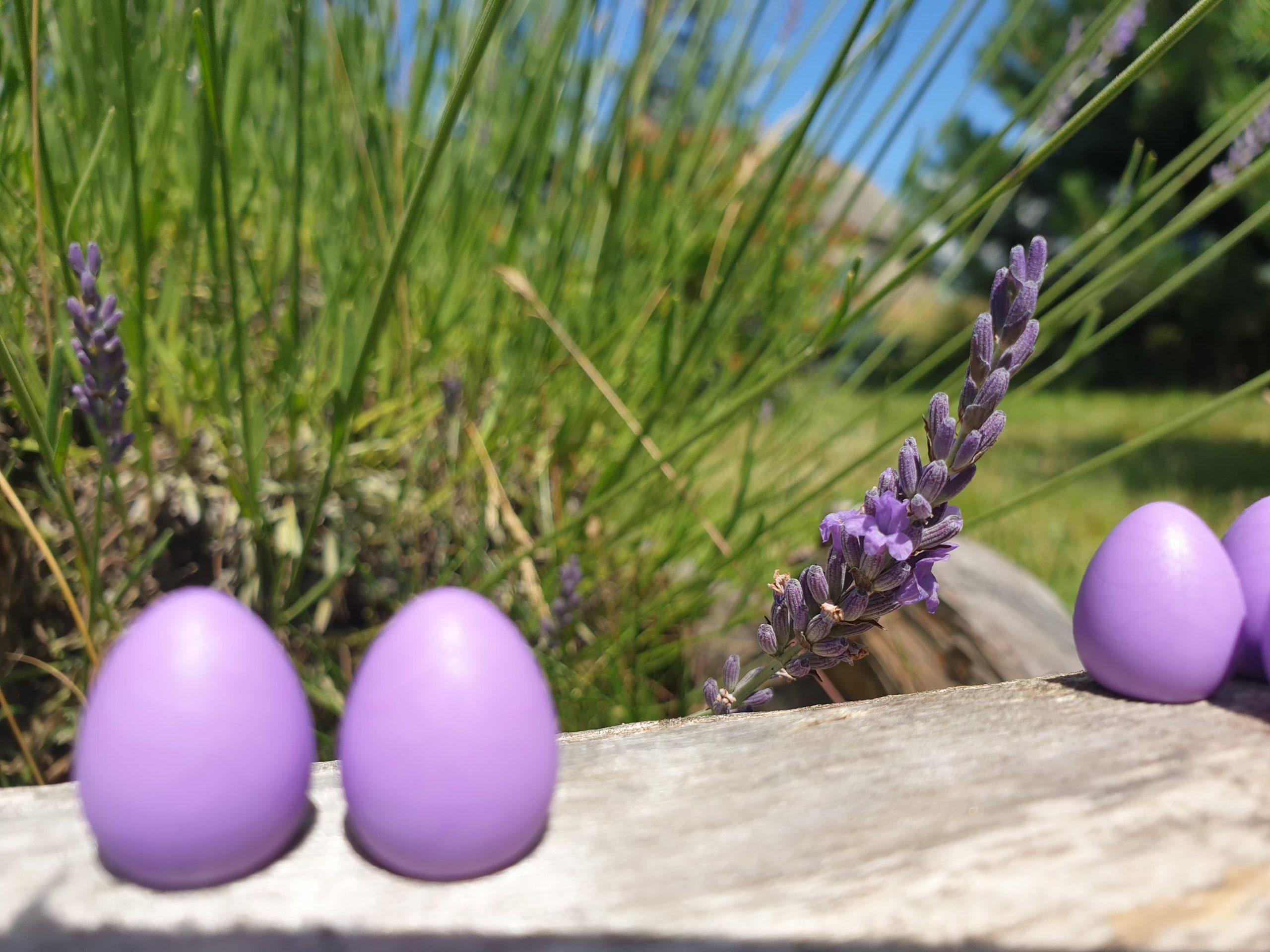 na skrzydłach jaja
